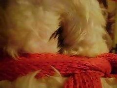 Imballaggio in pelliccia di pecora. ama la pelle di pecora, furbondage.