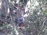 Pareja cojiendo en bosque morelia Michoacan