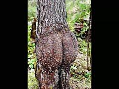 Funny stromové tvary