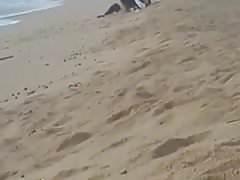Coppia catturata sulla spiaggia (coppia catturata sulla spiaggia)