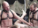 Bearded mature barebacked in bear threesome